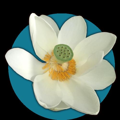 Lotus Flower Healing Sound Healing